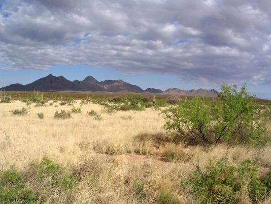 Chihuahuan Desert at the Jornada LTER